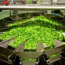 Photo of lettuce getting processed inside a factory